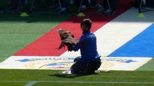 日産スタジアムを飛ぶ鷹